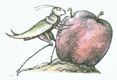 Grasshopper finds a worm in an apple