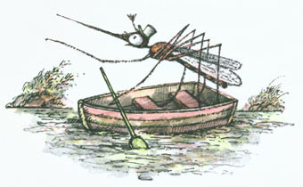 Mosquito in a ferryboat