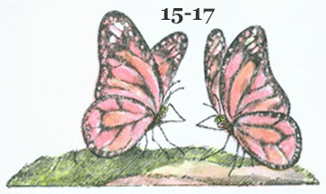 Two butterflies facing each other